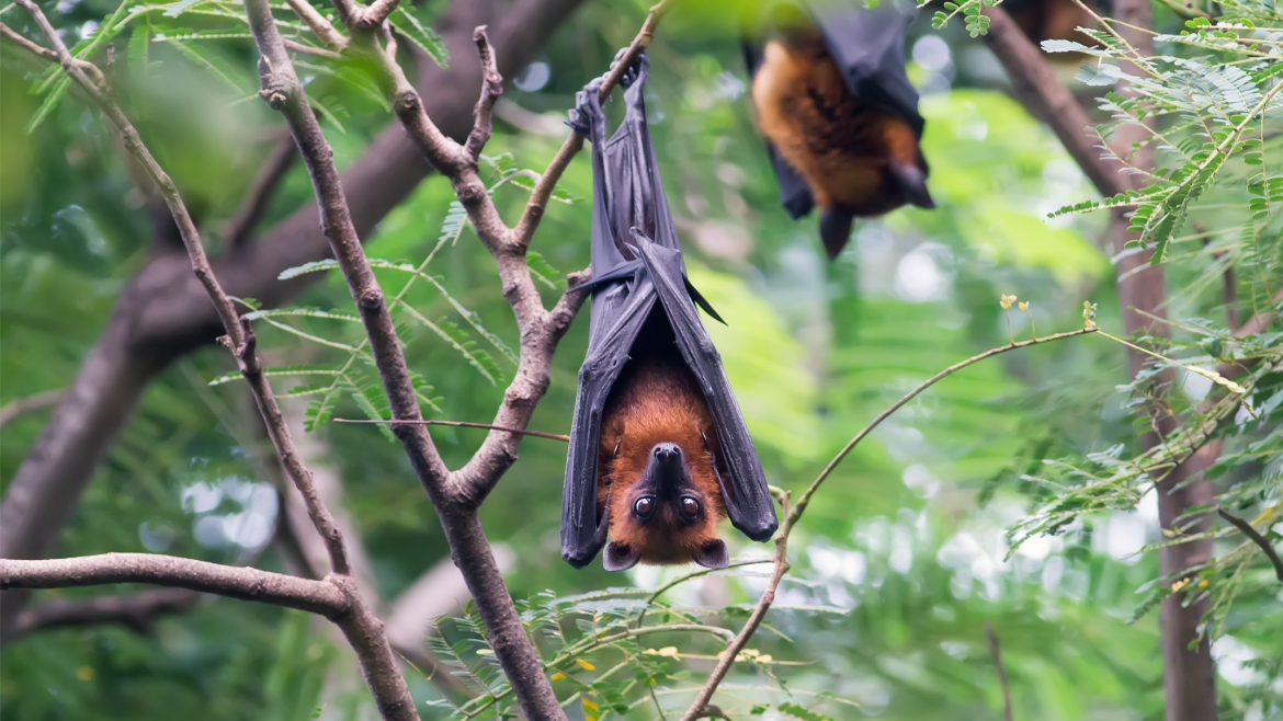 Bird, bat and rodent droppings
