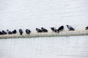 Bird droppings are unsightly and unhealthy.